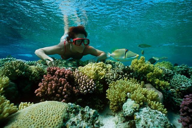 At Giftun Paradise Island Snorkeling Sea Trip